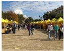 Viale Dohrn Antique Market