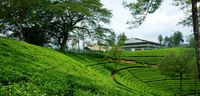 Nuwara Elia And Tea Country