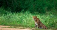 Bandipur National Park, India