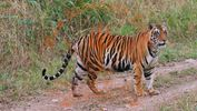 Ranthambhore National Park, India
