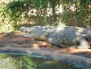 Broome Crocodile Park