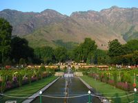 Essence  of srinagar - Premium