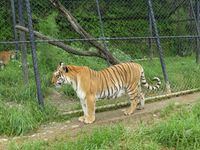 Tiger Tour With Naintial and Mussoorie - Premium