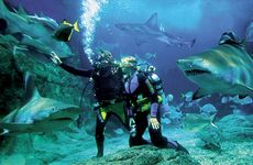 Andaman Diving Package For 6 Days