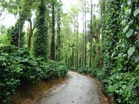 2N Mysore 2N Coorg Package - Luxury